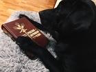 Увидеть изображение Вязка собак Мужчина ищет девушку для серьёзных отношений 45332987 в Краснодаре
