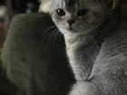 Просмотреть фотографию  Кот ищет кошечку на нашей территории 63711195 в Краснодаре