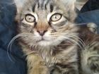 Уникальное изображение Отдам даром - приму в дар Отдам очень красивых и ласковых котят 68043470 в Краснодаре