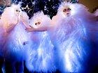 Скачать изображение  Светящиеся фьеки - пушистики на мероприятие 68922357 в Краснодаре