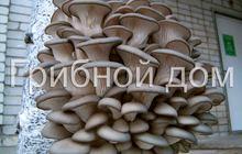 Активатор роста для грибов вешенка
