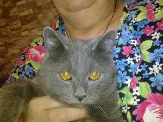 Смотреть foto Отдам даром - приму в дар Красивый котенок ждет своего доброго и заботливого хозяина 38555704 в Краснодаре