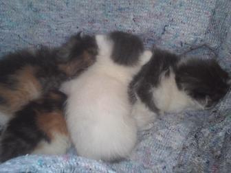 Свежее foto Отдам даром - приму в дар Отдам в хорошие руки котят! 38898817 в Краснодаре