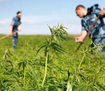 Фотография в   Покос травы бензокосой, мотокосой, триммером. в Краснодаре 0