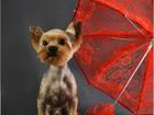 Фото в Собаки и щенки Стрижка собак Приглашаем Вас в наш Салон красоты, где опытные в Красноярске 1000