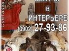 Смотреть foto  Чучела звеpей, птицы, 34647816 в Абакане