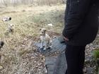 Фотография в Собаки и щенки Продажа собак, щенков Любители животных!   Спасите бездомных собак! в Красноярске 0