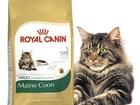 Скачать бесплатно фотографию Корм для животных Royal Canin ФБН Киттен Мейн кун 2 кг 37688078 в Красноярске