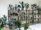 Уникальное фотографию  Стеллажи для магазина цветов 38416987 в Красноярске
