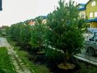 Скачать фото  Озеленение ваших участков 52866808 в Красноярске