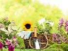 Свежее foto  Уход за садом, Озеленение, 66334168 в Красноярске