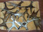 Скачать foto Охота Куплю рога лося, оленя и марала 69834535 в Красноярске