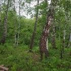 Продам з/у в Кузнецово (Кузнецовское плато) в лесной части массива