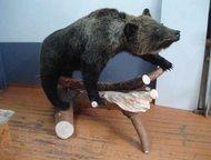 продам чучело медведя продам чучело медведя