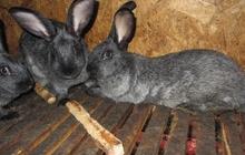 Кролики 2-4 месяца