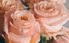 Роза оптом Шиммер в Красноярске к 8 марта