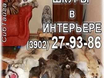 Свежее изображение  Чучела звeрей, птицы 33399436 в Абакане