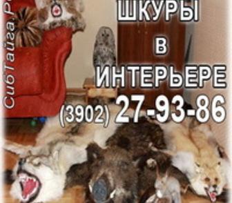 Фотография в   Продам и изготовлю на заказ чучела зверей в Абакане 0