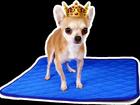 Фото в   Многоразовые пеленки для собак и других животных. в Москве 690
