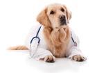 Изображение в   Частный врач-ветеринар, стаж более 20 лет. в Санкт-Петербурге 0