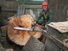 Смотреть фото  Удаление деревьев в стеснённых условиях 38021637 в Москве