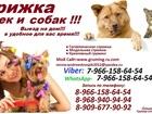 Смотреть изображение  Стрижка кошек и собак, Выезд на дом,Стрижка животных выезд в любой район Москвы и Московская Область 38458941 в Москве