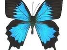 Увидеть foto  Живые тропические бабочки Бабочки Воронеж! 38855435 в Воронеже