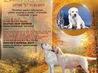 Фото в   Предлагаются к продаже высокопородные щенки в Москве 25000