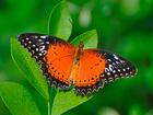 Увидеть foto  Тропические Живые Бабочки изИндонезии 40823492 в Краснодаре