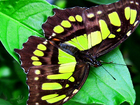 Новое изображение  Восхитительные Живые Бабочки изКоста Рикки 40823553 в Краснодаре
