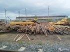 Столбы деревянные 2,5м100р 4м 150