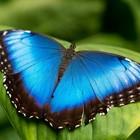 Живые тропические бабочки - Лучший подарок на любой праздник