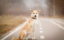 Джастин, собака-позитив в дар, 1 год