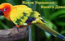 Яркий Попугайчик из питомника