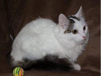 Новое foto  Кошка-крошка Нэнси 32713464 в Москве