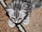 Скачать бесплатно фото Отдам даром - приму в дар Отдам даром котенка 33206044 в Курске