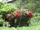 Скачать изображение Загородные дома Срочно продам дачу в Ж/Д, СО Ветеран 38744614 в Курске