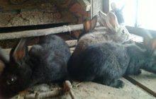 продам крольчат возраст 2 мес, привитые