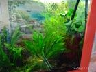 Просмотреть foto  Аквариумные растения из домашнего аквариума, 40057077 в Ликино-Дулево