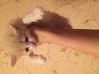 Фото в Кошки и котята Продажа кошек и котят ищут любящих хозяев маленькие котята  возраст в Липецке 0