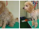 Увидеть фото Услуги для животных Профессиональная стрижка собак/кошек 39217102 в Липецке