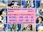 Фотки и картинки Сибирский хаски смотреть в Липецке