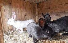 Кроликов продам