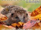 Просмотреть фотографию Разное Визитки листовки в Люберцах Жулебино Некрасовке Косино Томилино Выхино 33593159 в Люберцы