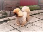 Скачать foto Услуги для животных Стрижка собак и кошек всех пород 7695715 в Люберцы