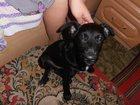 Изображение в Потерянные и Найденные Потерянные Нашелся щенок черного цвета (мальчик). Щенок в Магнитогорске 0