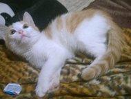 Котенок ищет себе дом Маленький котёночек очень ждет себе любящего хозяина! Очен