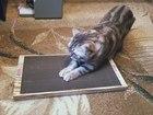 Скачать фотографию  Новые когтеточки-лежанки для кошек в Дагестане, 32874158 в Махачкале