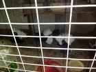 Увидеть фото  Голуби павлины 39078445 в Майкопе