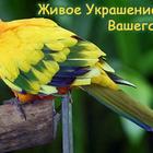 Питомник певчих и декоративных птиц